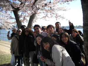 ILI students and the cherry blossoms